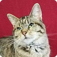 Adopt A Pet :: Whispurr - Colfax, IA