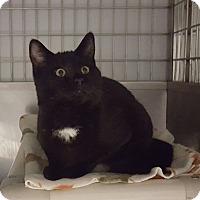 Adopt A Pet :: Anne - Lafayette, NJ