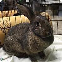 Adopt A Pet :: Biscuit - Woburn, MA