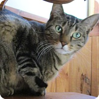 Adopt A Pet :: Kirby (de-clawed in front) - Witter, AR