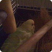 Adopt A Pet :: Gill - Orlando, FL