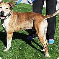 Adopt A Pet :: Shamrock - Gilbert, AZ
