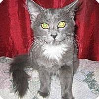 Adopt A Pet :: Spooky - Phoenix, AZ