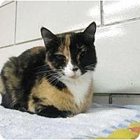 Adopt A Pet :: Salsa - Centerburg, OH