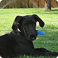Adopt A Pet :: Daphne - Broomfield, CO