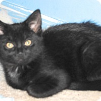 Adopt A Pet :: Four Black Cuties! - Colmar, PA
