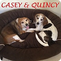 Adopt A Pet :: QUINCY & CASEY- Courtesy - Ventnor City, NJ
