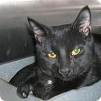 Adopt A Pet :: Taz - Caistor Centre, ON