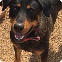Adopt A Pet :: Oliver - Cranford, NJ