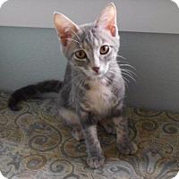 Adopt A Pet :: Petunia - Bentonville, AR