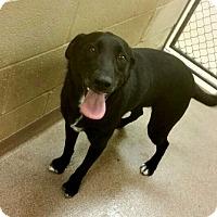 Adopt A Pet :: 1-3 - Triadelphia, WV