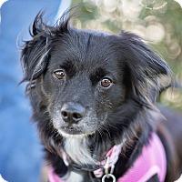 Adopt A Pet :: Chantilly - Kingwood, TX