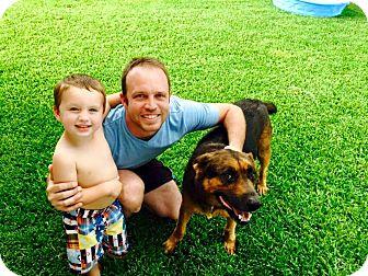 Shepherd (Unknown Type) Mix Dog for adoption in Austin, Texas - Duke