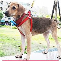 Adopt A Pet :: Betty - Surrey, BC
