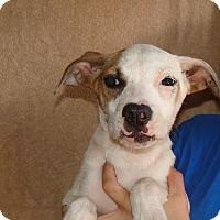 Adopt A Pet :: Wilson - Oviedo, FL