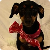 Adopt A Pet :: Olive - McKinney, TX