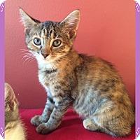 Adopt A Pet :: Justice - Mt. Prospect, IL