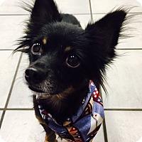Adopt A Pet :: Monty - West Columbia, SC