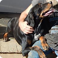 Adopt A Pet :: Raleigh (60 lb) Video! - Burlington, VT