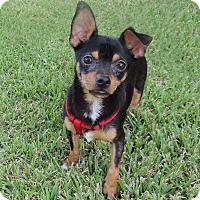 Adopt A Pet :: Ace - Humble, TX