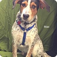 Adopt A Pet :: Max - Hibbing, MN