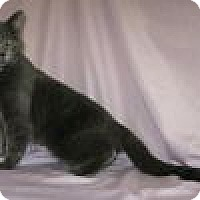 Adopt A Pet :: Dory - Powell, OH