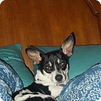 Adopt A Pet :: Cupcake - Arkadelphia, AR