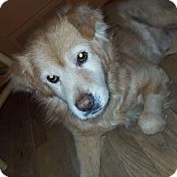 Adopt A Pet :: Hank - Dayton, OH