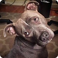 Adopt A Pet :: Callie - Sunnyvale, CA