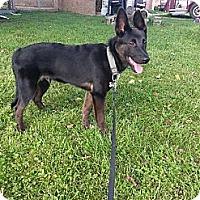 Adopt A Pet :: Rebel - Linton, IN