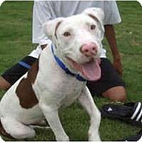 Adopt A Pet :: Theo - Scottsdale, AZ