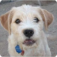 Adopt A Pet :: Tuffy - Golden Valley, AZ