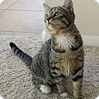 Adopt A Pet :: Eleanor - Scottsdale, AZ