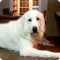 Adopt A Pet :: Harlow - Austin, TX