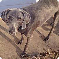 Adopt A Pet :: Winston - Des Moines, IA