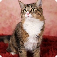 Adopt A Pet :: Willow - Eagan, MN