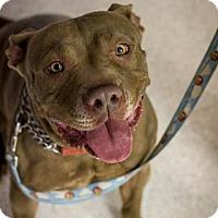 Adopt A Pet :: Helen - Scottsdale, AZ
