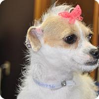Adopt A Pet :: Lizzy - Tumwater, WA
