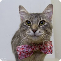 Adopt A Pet :: Autumn - Mission Viejo, CA