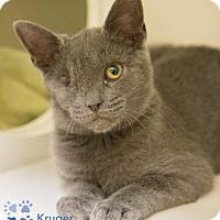 Adopt A Pet :: Kruger - Merrifield, VA