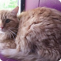 Adopt A Pet :: Bramwell Bronte - Ennis, TX