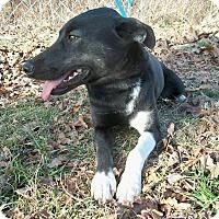 Shepherd (Unknown Type) Mix Dog for adoption in Horseshoe Bend, Arkansas - Ruthie