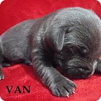 Adopt A Pet :: Van - Batesville, AR