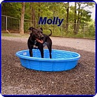 Terrier (Unknown Type, Medium) Mix Dog for adoption in Berkeley Springs, West Virginia - Molly