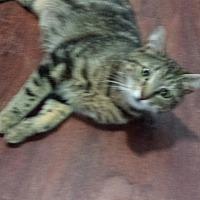 Adopt A Pet :: Sweet Pea - Smyrna, GA