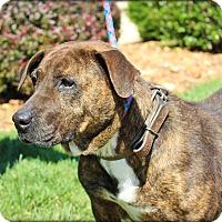 Adopt A Pet :: Reese - Clarksville, TN