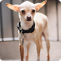 Adopt A Pet :: Buffy - Portland, OR