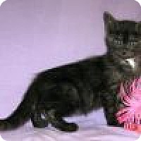 Adopt A Pet :: Mogli - Powell, OH