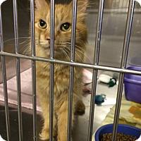 Adopt A Pet :: Jacinda - Byron Center, MI