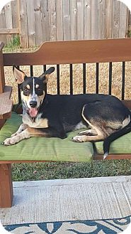 Hound (Unknown Type) Mix Dog for adoption in Spring, Texas - Ace